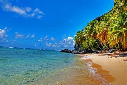 Tropical Palm Beach Trees Landscape Desktop Background