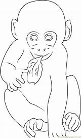 Monkey Coloring Leaf Eating Coloringpages101 Printable sketch template