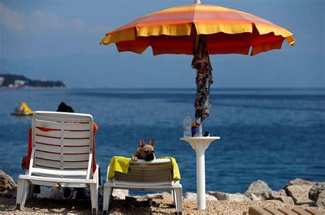 Summer Dog Beach