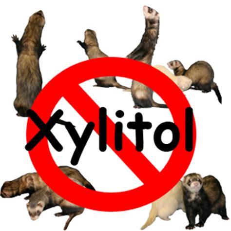 caution  xylitol hide  hole ferret rescue