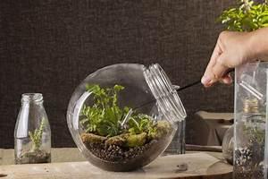 Bonsai Im Glas : flaschengarten kleines kosystem im glas indoor pflanz und pflegetipps f r zimmerpflanzen ~ Eleganceandgraceweddings.com Haus und Dekorationen
