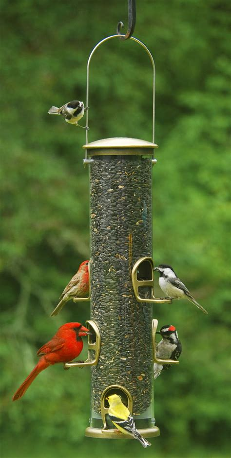 wild birds unlimited why feed birds in the fall