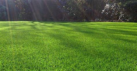 semina tappeto erboso il pollice verde notizie ed eventi su piante e