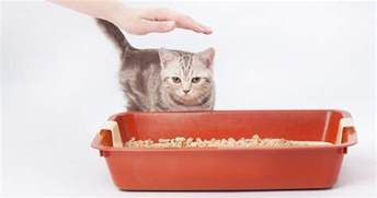 how often to change cat litter how often do i need to clean my cat s litter box