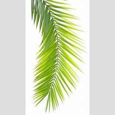 Fausse Feuille De Palmier  Palme De Phoenix  Palmiers Artificiels
