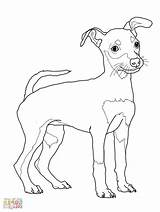 Miniature Pinscher Drawing Coloring Printable Getdrawings Puppy sketch template