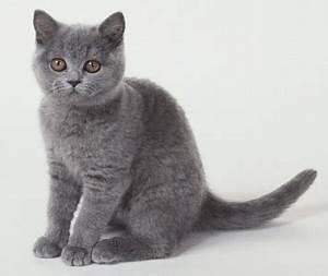 Boa Chart Animais Amor Infinito Descrição De Raças De Gatos