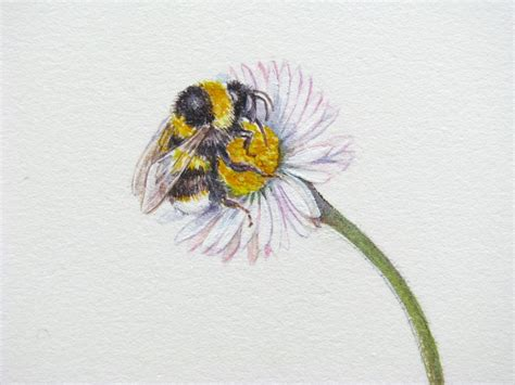 botanical sketches   stories bees  butterflies