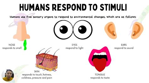 HUMANS RESPOND TO STIMULI SCIENCE YEAR 4 - YouTube
