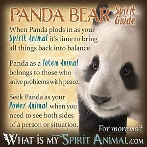 Red panda spirit guide