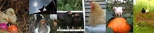 Hühnerhaltung Im Wohngebiet : h hner informationen f r h hnerhalter ~ Eleganceandgraceweddings.com Haus und Dekorationen