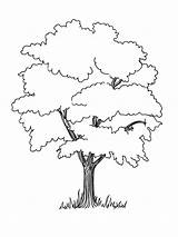 Tree Coloring Trees Pages Elm Oak Drawing Baobab Printable Fruit Deciduous Section Designlooter Getdrawings Nature Coniferous Contains Both Drawings 1000px sketch template