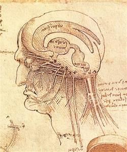 Leonardo Da Vinci E L U0026 39 Anatomia