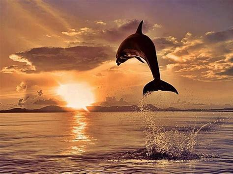 dolphin dolphins animal dolphins animals beautiful