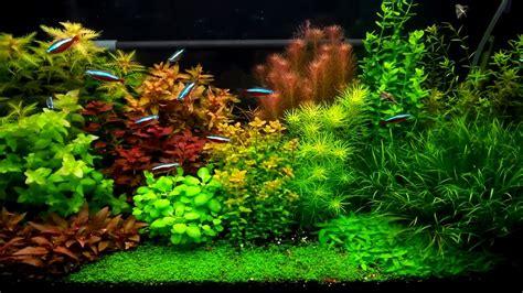 Aquascape Styles