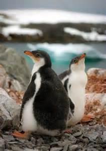 Adorable Animal Penguin