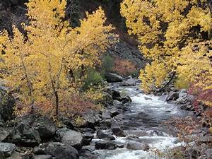 Cold Mountain Streams Offer Climate Refuge  Future Holds