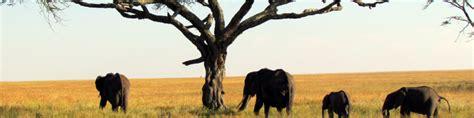 Africa - Wikitravel