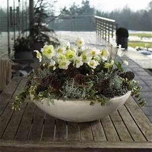 zauberhafte christrose winter bepflanzungen fur balkon With französischer balkon mit solarlampen garten winter
