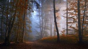 Nature, Landscape, Forest, Fall, Mist, Path, Trees