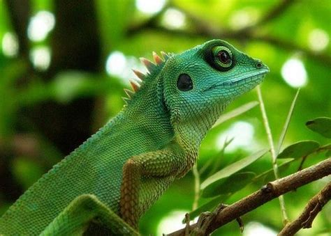 funny chameleon pictures  news icon