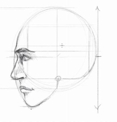 Face Side Draw Proportions Drawing Facial Rostro