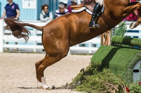 injured list common problems  show horses