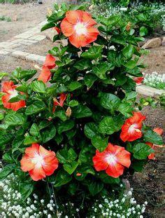 Pin by Vivian Davis on Flowers | Florida gardening ...