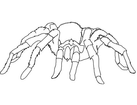 Spider Free Coloring Pages