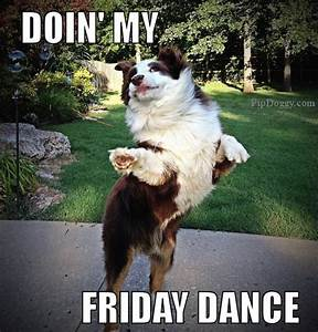 Dogs Friday Dance - What Breed Is it