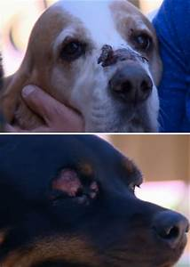 allergic reaction leaves two dogs injured