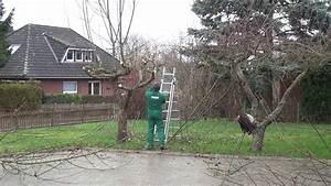 Kirschbaum Richtig Schneiden : baum zur ck schneiden 2016 so macht man es richtig ~ Lizthompson.info Haus und Dekorationen