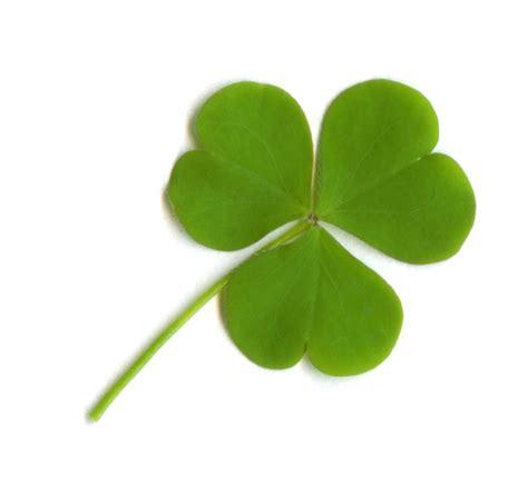 cuisine irlande les symboles de l irlande j 39 aime l 39 irlande