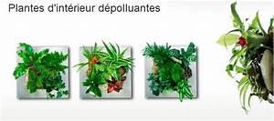 Plante D Intérieur Pas Cher : cadre v g tal encyclo l 39 encyclop die cologique ~ Dailycaller-alerts.com Idées de Décoration