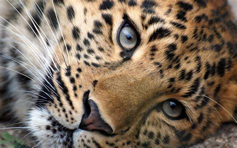arriere plan de bureau animé fonds d 39 écran animaux sauvages afrique maximumwallhd