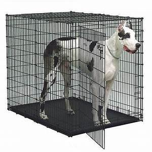 midwest colossal dog crate crate midwest grandejpgv With big dog crates cheap