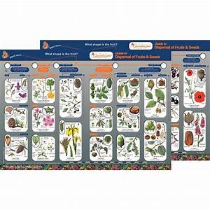 Dispersal Of Fruits And Seeds Guide
