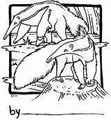 Coloring Anteater Adults Adult sketch template