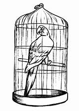 Cage Bird Coloring Parrot Pages Drawing Caged Printable Getcolorings Jaula Clipartmag Button Through Paper sketch template