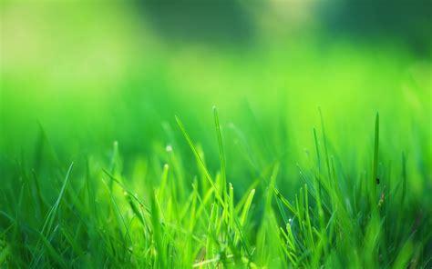 Green Grass Field Wallpapers