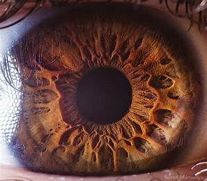 stunning macro photography shows the of the human eye