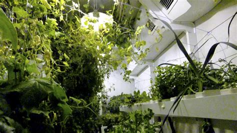 plants need light bioed