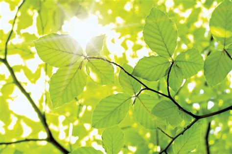 Pictures of Plant and Tree Leaves