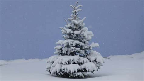 us forest service christmas tree permits now on sale ncwlife