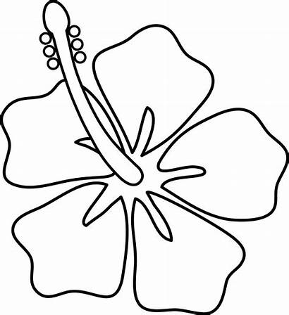 Cartoon Flowers Jamaica Drawing Draw Getdrawings