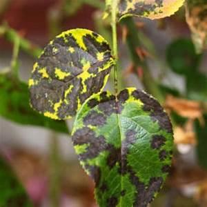Ruggine delle piante: i rimedi contro la ruggine delle piante