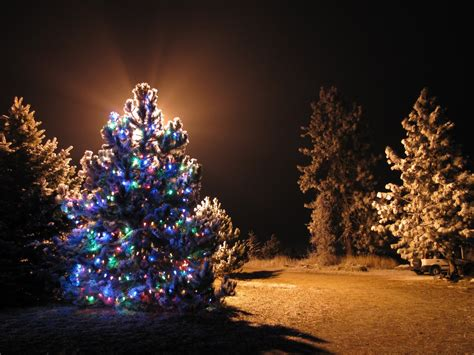 outdoor lighted tree ornaments fancy outdoor christmas decorating ideas with tree and