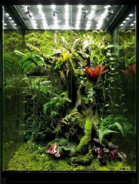 die besten  vivarium ideen auf pinterest aquarium