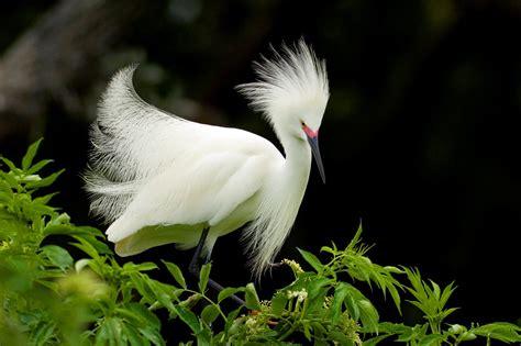 White Hairy Bird Pics | HD Wallpapers