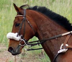 Where's the bit? Part II: Mechanical hackamore | HORSE NATION